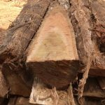 Green Is Timber Brazil#Teak logs 2#Teakmill#Teakplantation